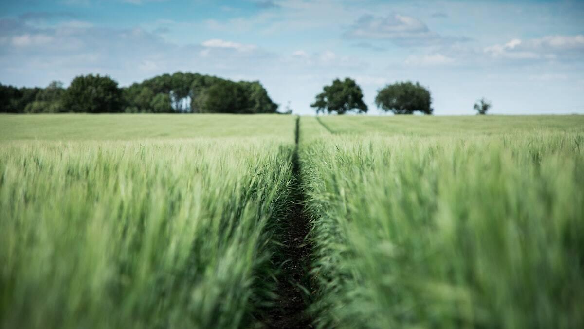 Managing PCOS Through Natural Treatment